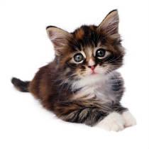 cat-pic